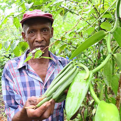 Anicet the Vanilla Planter LAVANY Bourbon from Madagascar in Betavilona