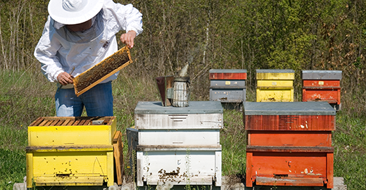 Apiary for natural pollination of flowers