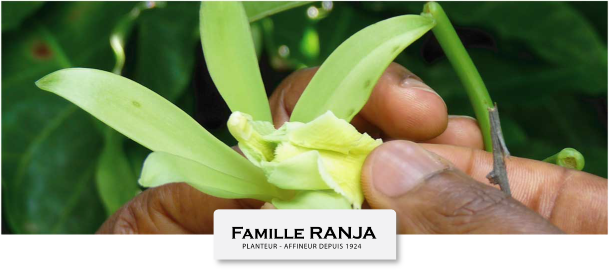 Organic Agriculture Ets. RANJA in Madagascar